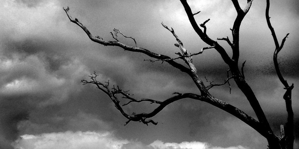 storm-tree-1316835-1600x1200